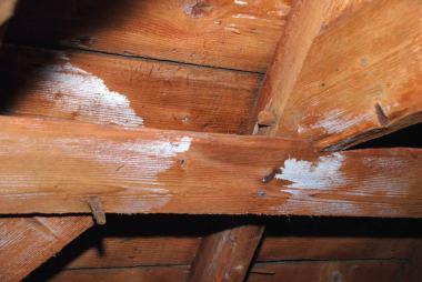 Warum sind Untersuchungen auf Holzschutzmittel wichtig?